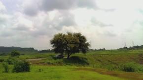 Nature-Landscape-Greenery-Photography