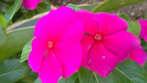 Photography-Macro-Flowers