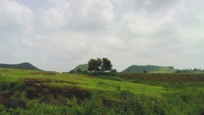 Photography-Landscape-Nature-Greenery
