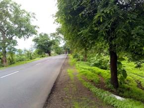 Photography-Nature-Rainy-Season-Monsoon-Greenery