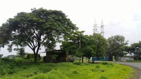 Photography-Nature-Monsoon-Rainy-Season-Pictures