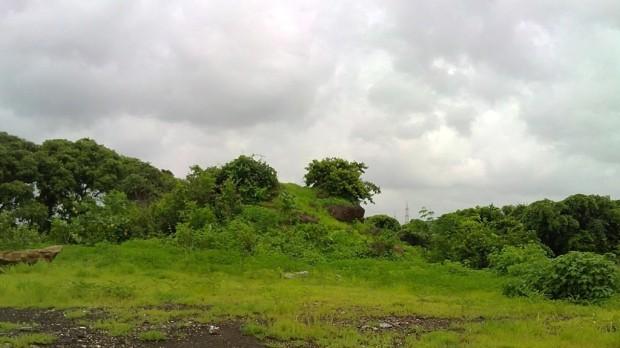 Photography-Nature-Rainy-Season-Lucid-Dreaming-Greenery