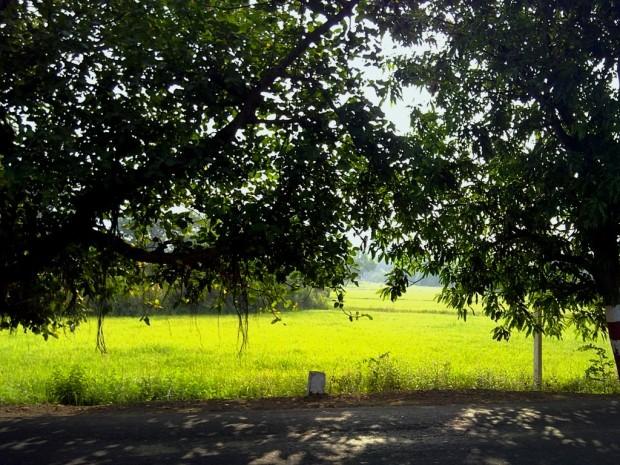 Photography_Nature-Rainy-Season-Greenery