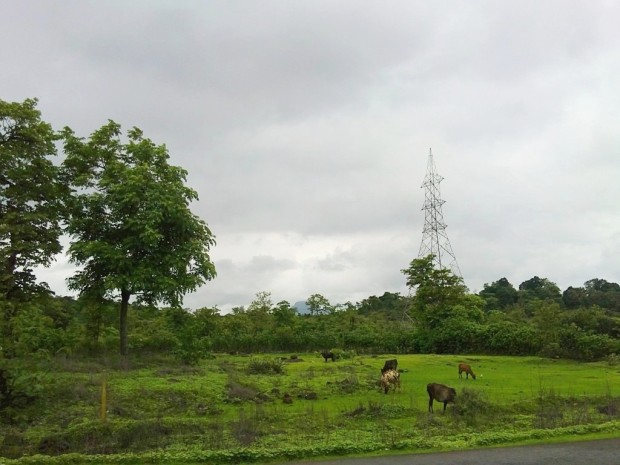 Photography-nature-Monsoon-Season-Greenery