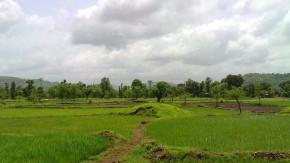 Photography-Nature-Rainy-Season-Greenery-Lucid-Dreaming