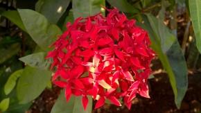 Macro-Photography-Flowers