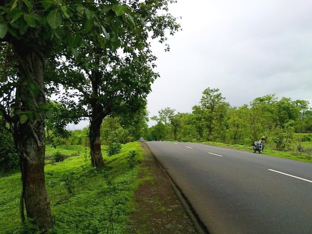 Photography-Nature-Monsoon-Greenery