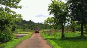 Photography-Nature-Rainy-Season-Greenery