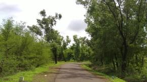 Photography-Nature-Greenery