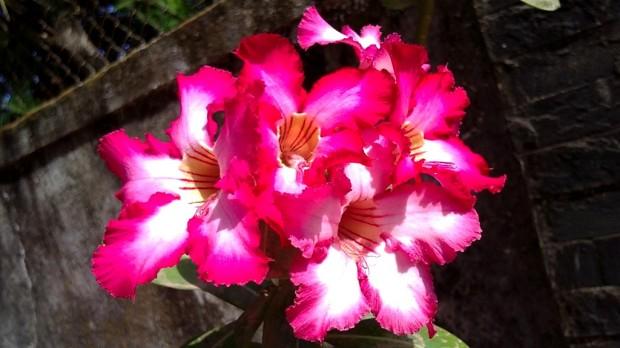 Latina Women, Flowers, Gradening, Photography, Pictures, Photos