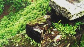 Photography-Abstract-Nature-Rainy-Season-Greenery
