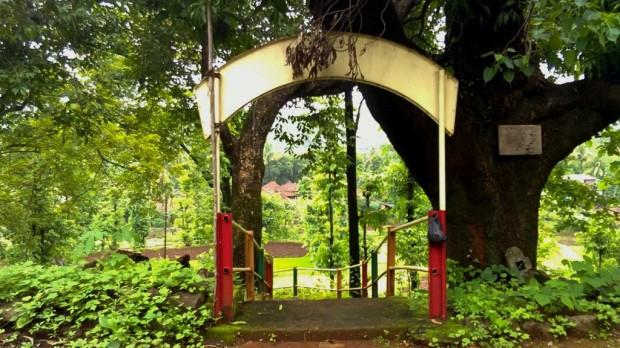 Photography-Nature-Landscape-Greenery-Rainy-Season