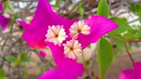 Macro-Photography-Flowers-Pictures