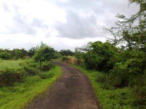 Photography-Nature-Pictures-Rainy-Season-Greenery
