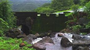 Nature-Photography-Rainy-Season-Greenery