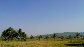 Photography-Nature-Landscape-Goa-Trees-Pictures