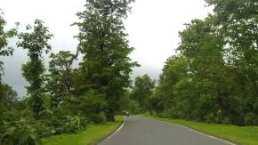Nature-Photography-Rainy-Season