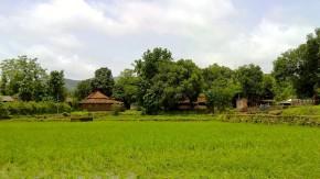 Nature-Photography-Greenery-Rainy-Season
