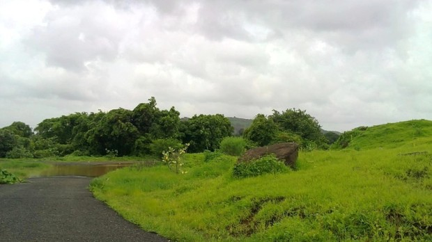 Nature-Photography-Monsoon-Pictures-Greenery