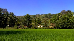 Pictures-Goa-Nature-Photography