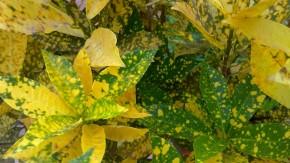 Macro-Photography-Nature-Yellow-Leaves