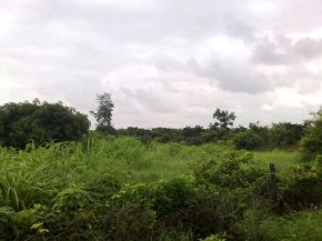 Photography-Nature-Monsoon-Greenery-Pictures