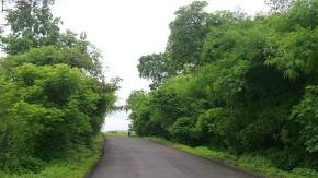 Nature-Photography-Greenery