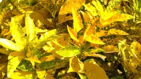 Photography-Macro-Colorful-Leaves-Pictures