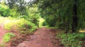 Nature-Phoyography-Rainy-Season-Greenery