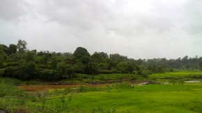 Greenery Nature Landscape Photos