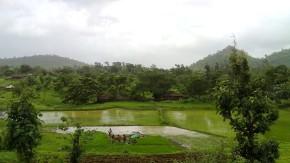 Miksang Nature Photography