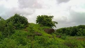 Nature Photography Go Green Environment