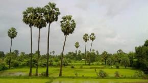 Nature-Potography-Green-Landscape-Environment