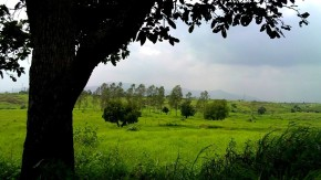 Rainy-Season-Greenery-Landscape-Pictures